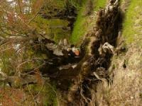 Trekking con gli Orsi nel Parco Nazionale d'Abruzzo 8 e 9 giugno 2013